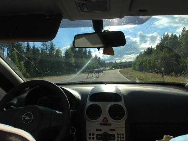 Финляндия. Кемиярви. Финляндия, Лапландия, Лига путешественников, длиннопост, рассказ, подборка фотографий