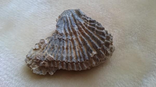 Находка из Атласских гор находка, палеонтология