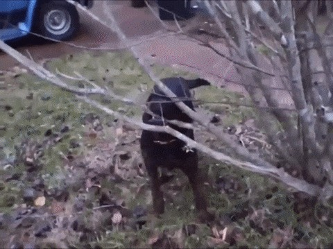Собака проиграла