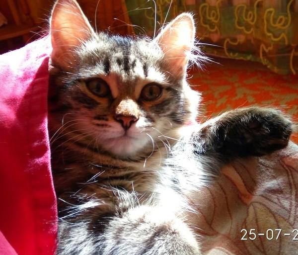 Подобрашка кот, потеряшка, длиннопост