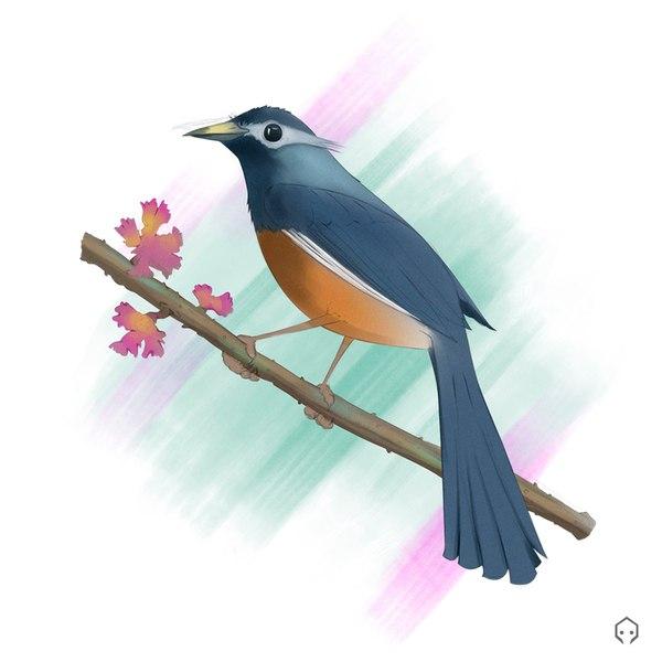 Рисую птицу в фотошоп и чуток комментирую птицы, рисунок, художник, Photoshop, youtube, каналы youtube, арт, цифровой рисунок, видео