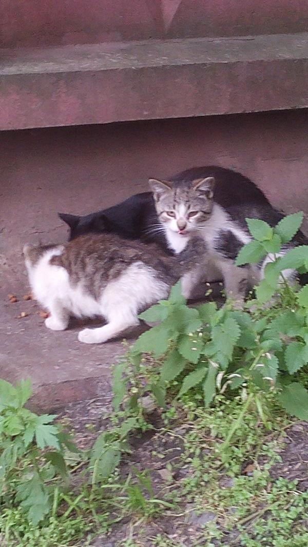 Котята ищут дом Санкт-Петербург кот, ищут, дом, Санкт-Петербург, длиннопост