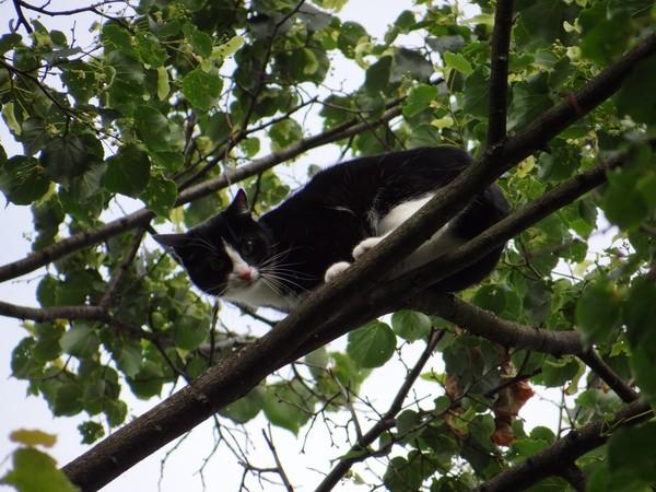 Кошка решила, что она птица и переехала жить в гнездо! кот, история спасения, гнездо, спасатель, длиннопост