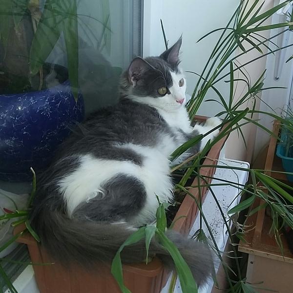 Знакомьтесь,Семён!) было-стало, кот, Чужих котов не бывает, семен, балкон, длиннопост