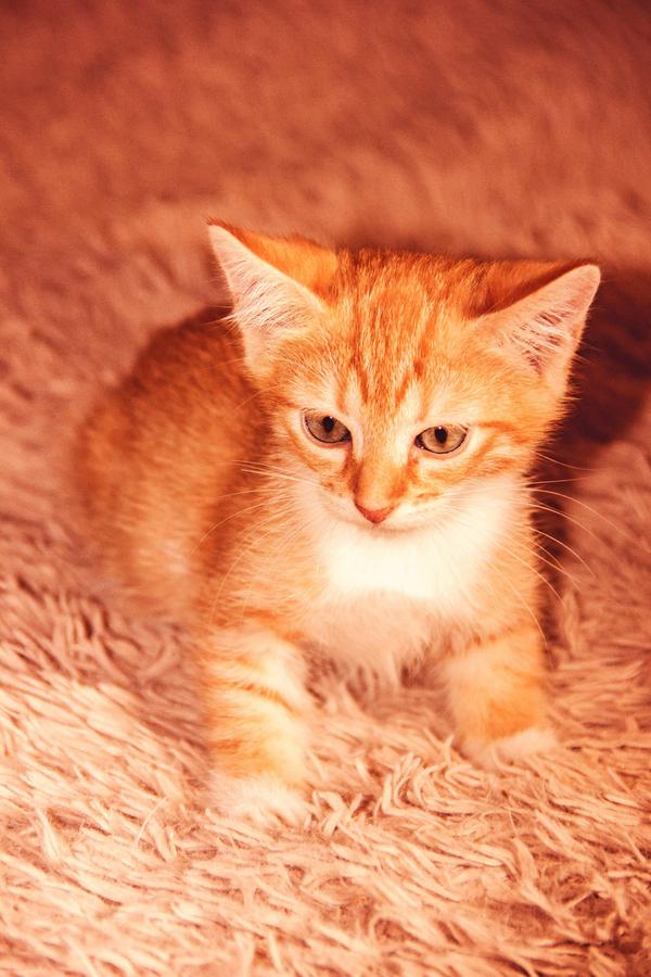 Кошка в поисках счастья Москва, кот, помощь, в добрые руки, длиннопост