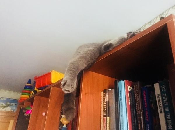 Долго искали кота) нашли спящую лапу, а там и все остальное