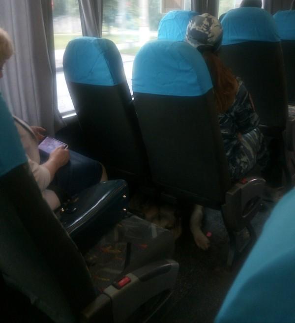 Собака под сиденьем Собака, Автобус, Собака в автобусе