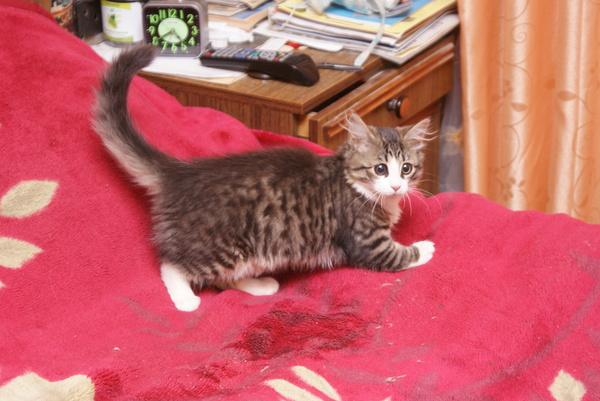 Кошка Няша за 5 лет кот, Няша, Толстяша, длиннопост