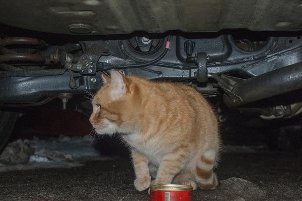 Бездомные коты нашего двора кот, Минск, Котомафия, длиннопост
