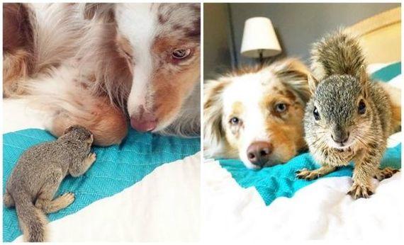 Животные, растущие вместе: до и после милота, Животные, Подборка, до и после, кот, собака, свинья, белка, длиннопост
