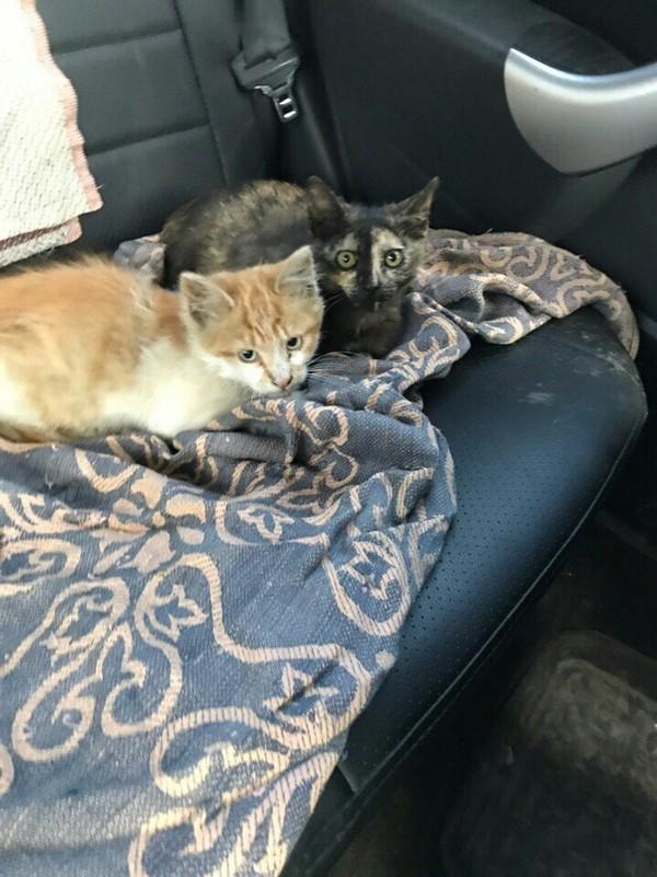 Байкерский кот Харлей кот, Помощь, пристройство, помощь животным, длиннопост, сила пикабу