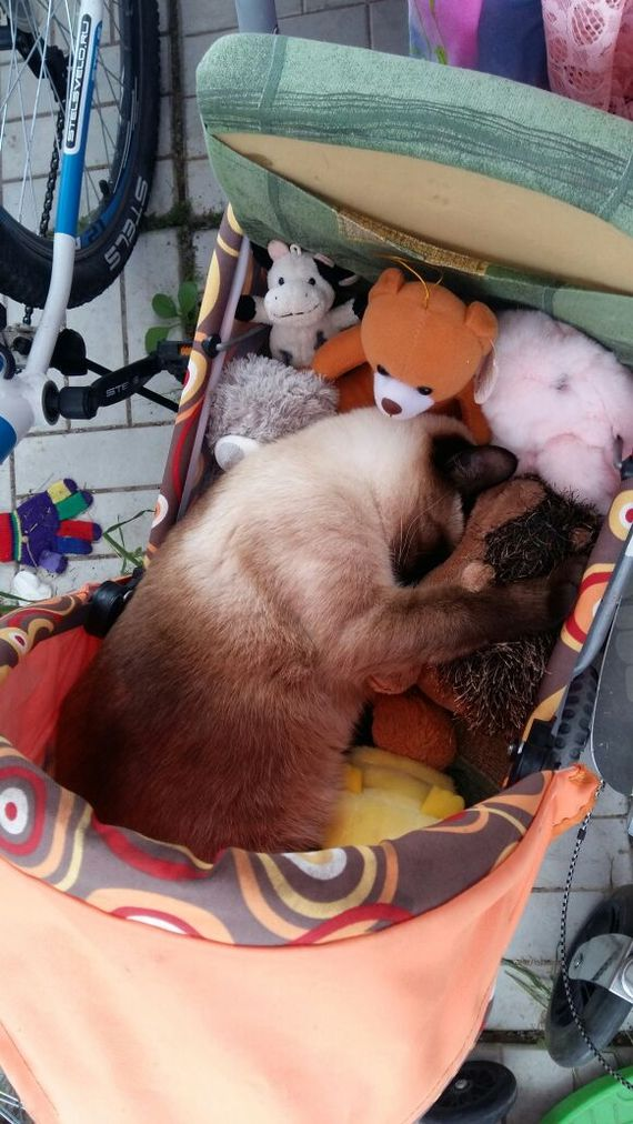 Спят усталые игрушки кот, фотография, Коляска, игрушки, длиннопост
