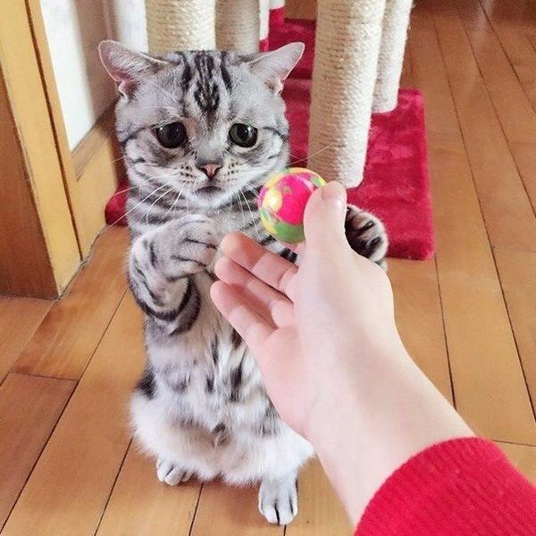 Грустно кот, грусть, длиннопост