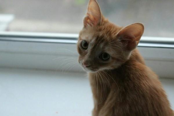 Паприка кот, было-стало, выросла, рыжая морда, привет читающим тэги, милота, длиннопост