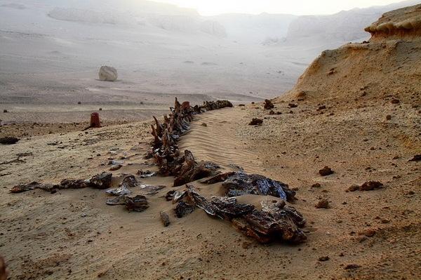 Берег Скелетов в Намибии корабль, кораблекрушение, Пустыня, скелет
