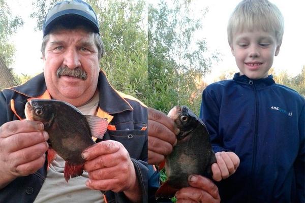 Омские пираньи. омск, Интересное, Россия, необычное, рыбалка, Природа