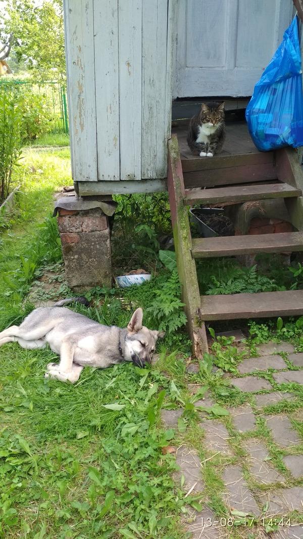ГРАЖДАНЕ ПАССАЖИРЫ! НЕ ПРОХОДИМ МИМО! найдена собака, Животные, найденыш, ищу хозяина, Умный, Москва, подмосковье, длиннопост
