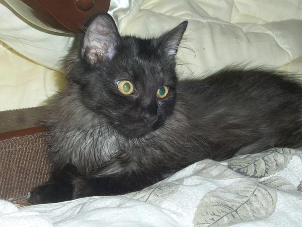 Котейка все еще ищет новый дом. отдам в хорошие руки, кот, Москва, длиннопост