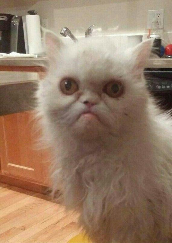 Это я, Лёха.. Да клянусь, это последний раз! Ну вытащи меня из кота!