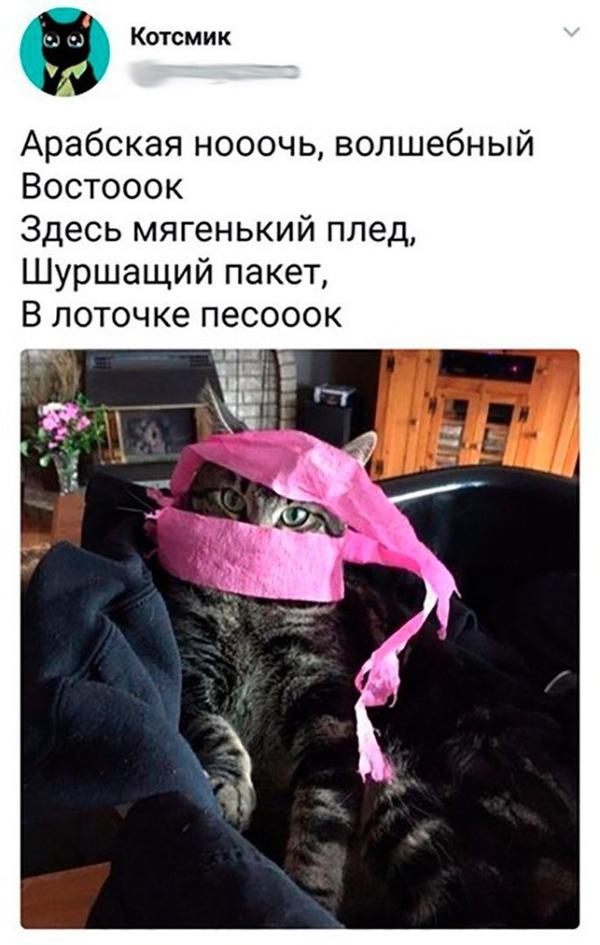 Кошачий алладин