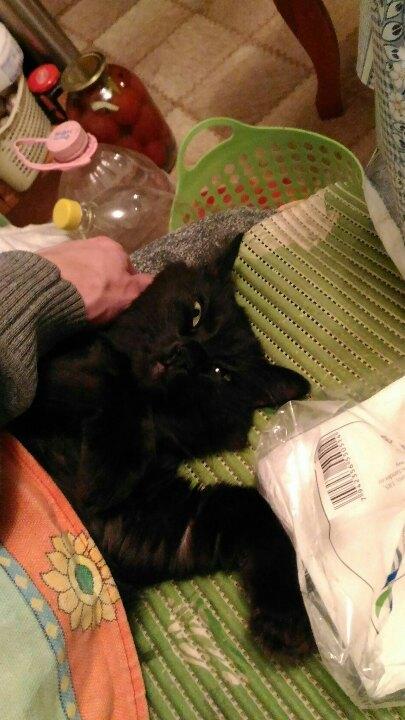 Моя Мася. кот, Смерть, длиннопост
