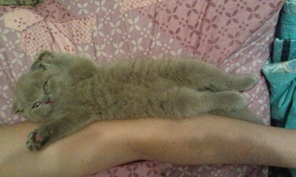 """На волне постов """"Было-Стало"""" длиннопост, было-стало, кот, Животные, домашние животные"""