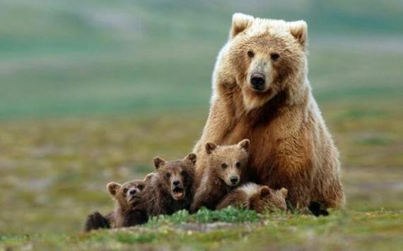 Письмо счастья и сарказма рекомендации, совет, Лайфхак, медведь, длиннопост