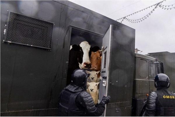 У белорусской милиции будет свой колхоз колхоз, милиция, Беларусь, зеки, работа, продукция, жизнь, труд