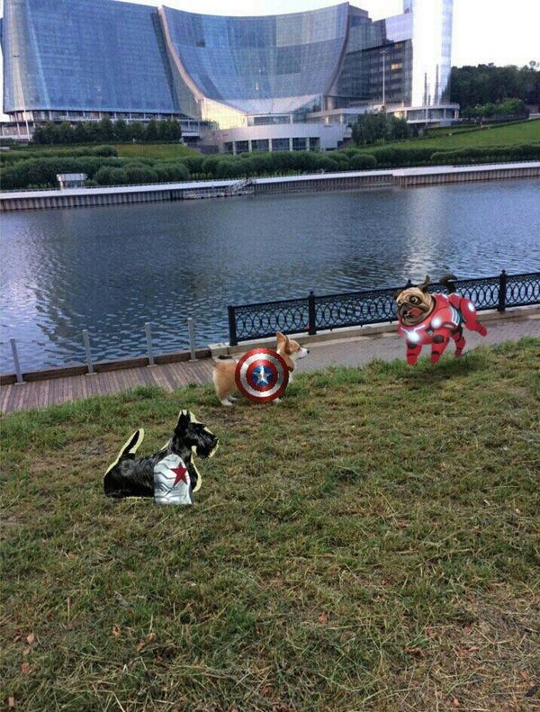 Пушистый мститель корги, Вельш-корги пемброк, корги-наш выбор, Marvel