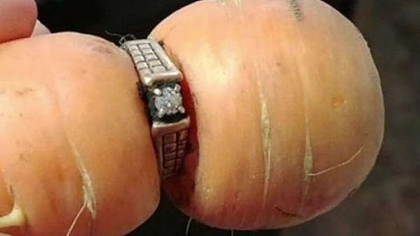 Женщина нашла потерянное 13 лет назад обручальное кольцо на моркови канада, кольцо, Удача, клад, морковь