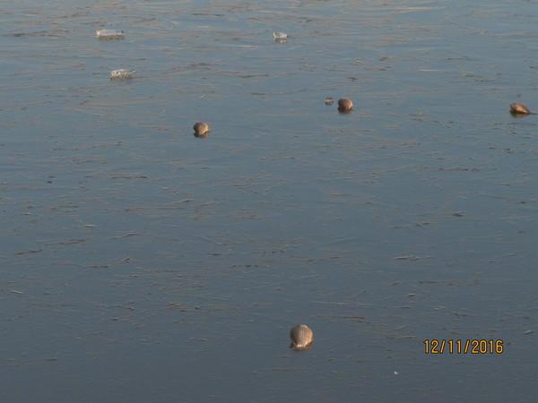 Откуда Рыба, почему?, Лёд