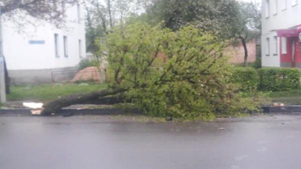 Улики улики, дерево, авто, авария