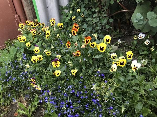 Они явно чем то недовольны Чтозацветы?, цветы, Недовольство