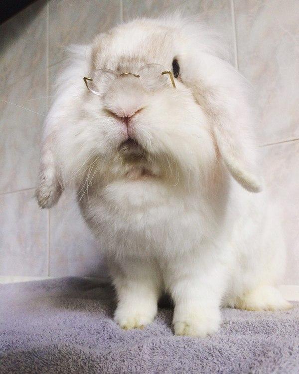 Учёный кролик