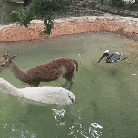 Это мой бассейн!
