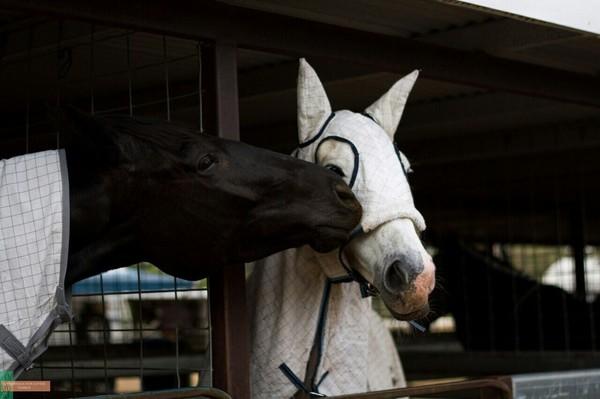 Когда пытаешься понежничать, но она не в духе лошадь, милота