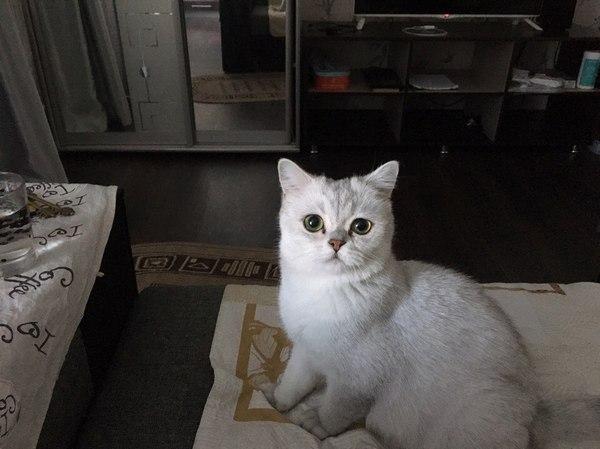 Яйцо кошки домашние животные, кот
