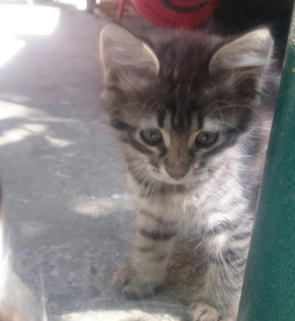 Котейки в добрые руки без регистрации и смс, отдам в хорошие руки, Ростов-на-Дону, длиннопост, кот