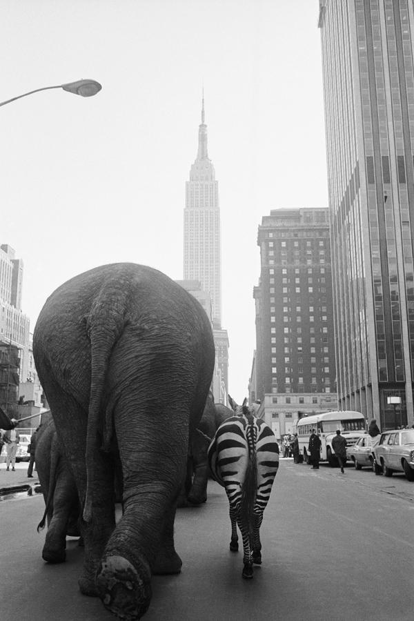 Интересные и редкие ретро-фотографии #25 ретро, прошлое, Подборка, 20 век, Интересное, фотография, история, длиннопост