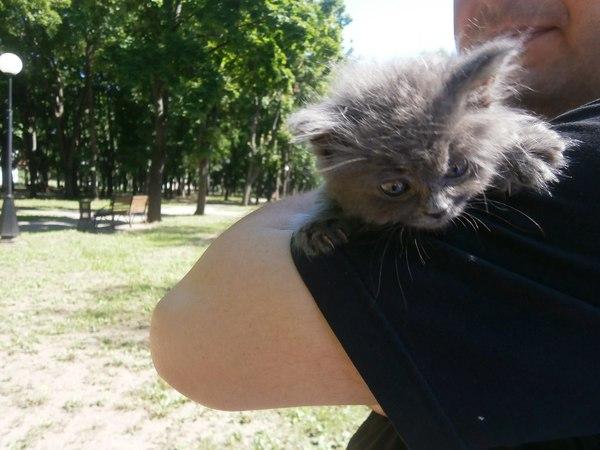 Было Стало было-стало, Котофото котики, милота, длиннопост, кот