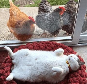 Сегодня пятница и никакие курицы нам не помешают