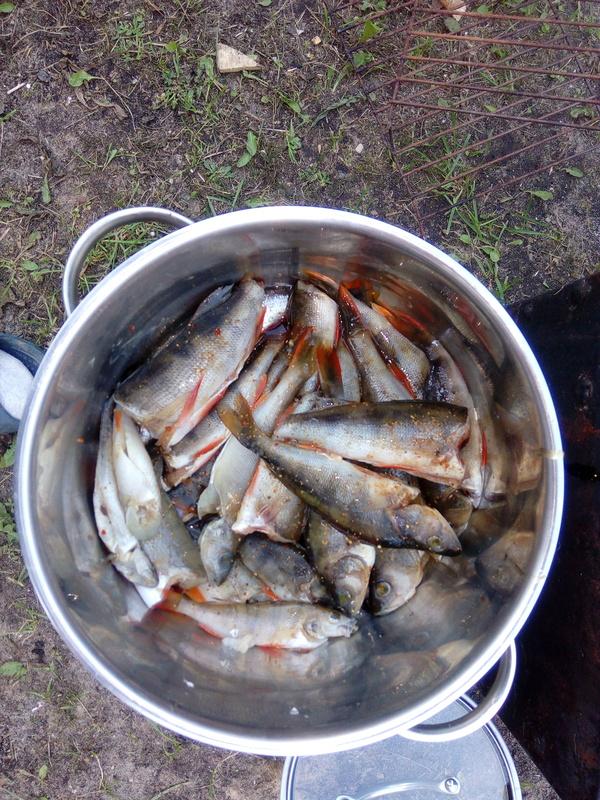 Горячее копчение Рыба, горячее копчение, длиннопост