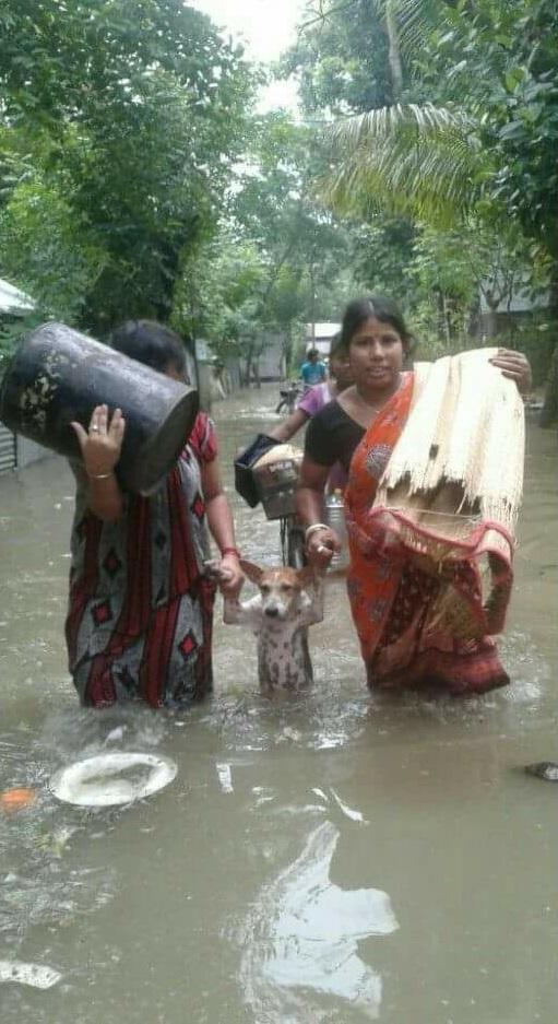 Две женщины спасают собаку во время наводнения в Индии