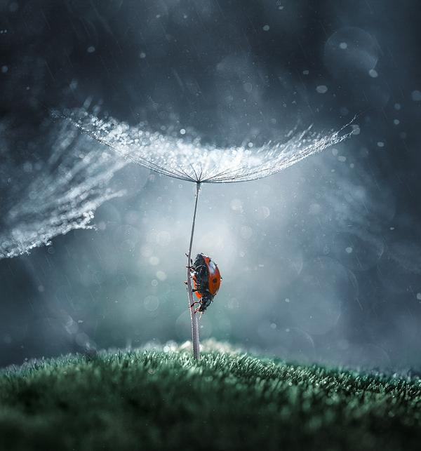 Божья коровка Blender, Анимация, 3d blender, 3d animation, cycles, ladybug, божья коровка, видео