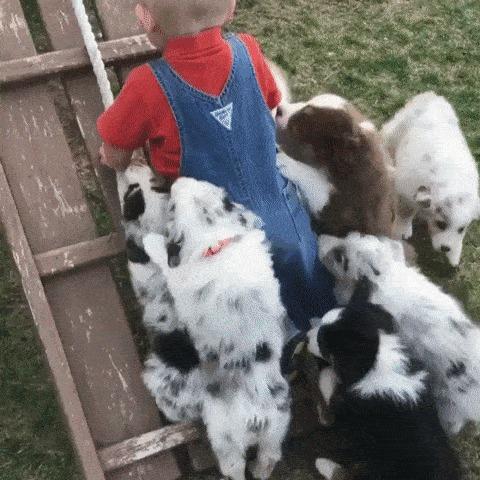 Все хотят играть.