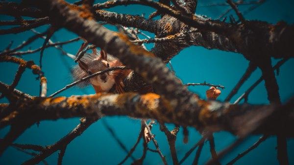 Белка белка, лес, природа
