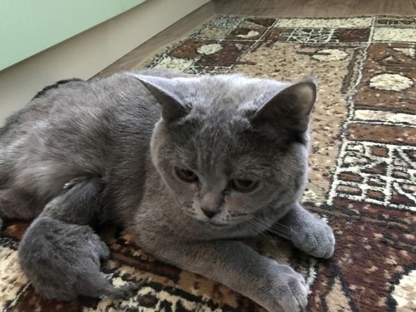 В прошлом посте забыл представить кошечку - её Соня. кот, котомафия, длиннопост