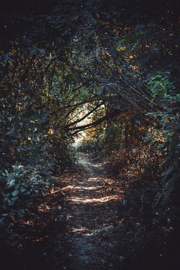 Обратная сторона парка Солнечный остров фотография, Краснодар, лето, хобби, моё, длиннопост