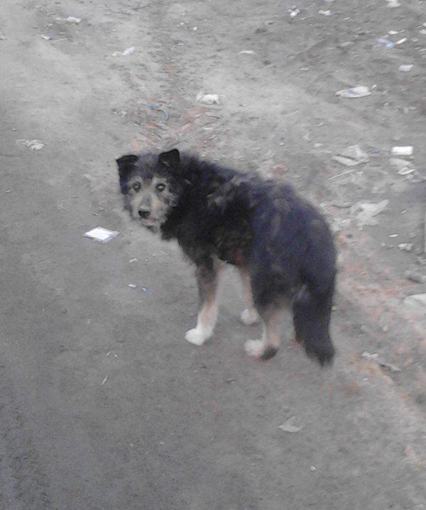 Пропал пес Пропал черный пес, Помогите найти Черныша, помощь животным, собака, Пропала собака