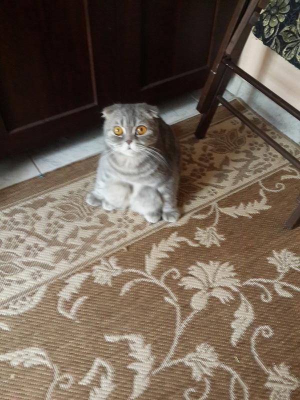 Кому как удобнее. кот, Коржик, Белка